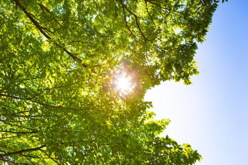 太陽と木漏れ日の写真素材