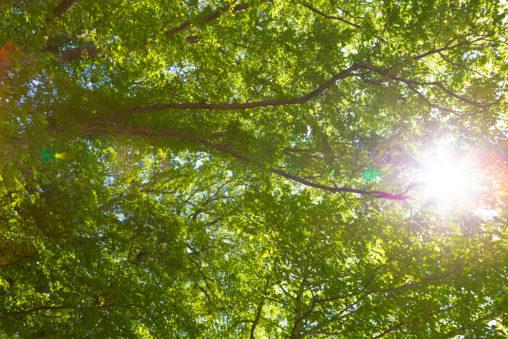 太陽と木漏れ日02の写真素材