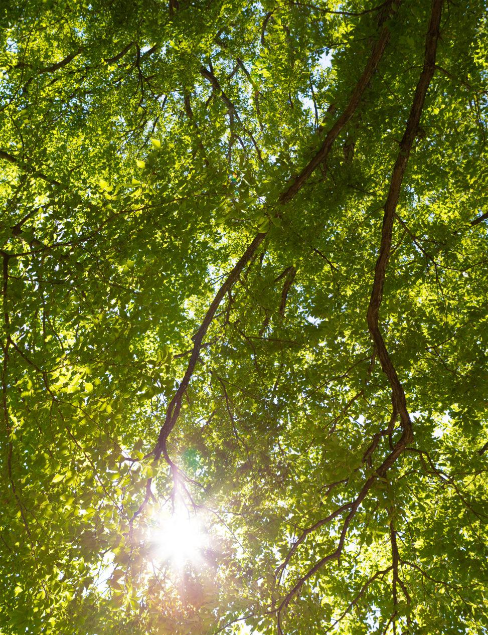 太陽と木漏れ日03の写真素材