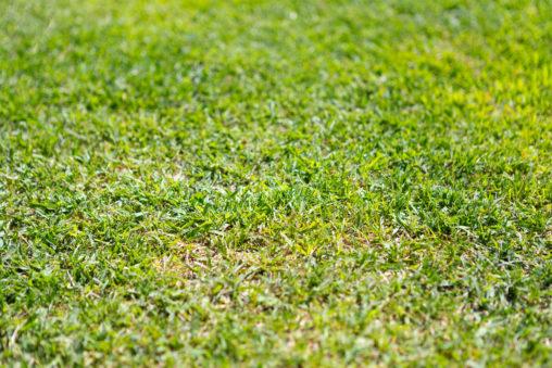 芝生02の写真素材