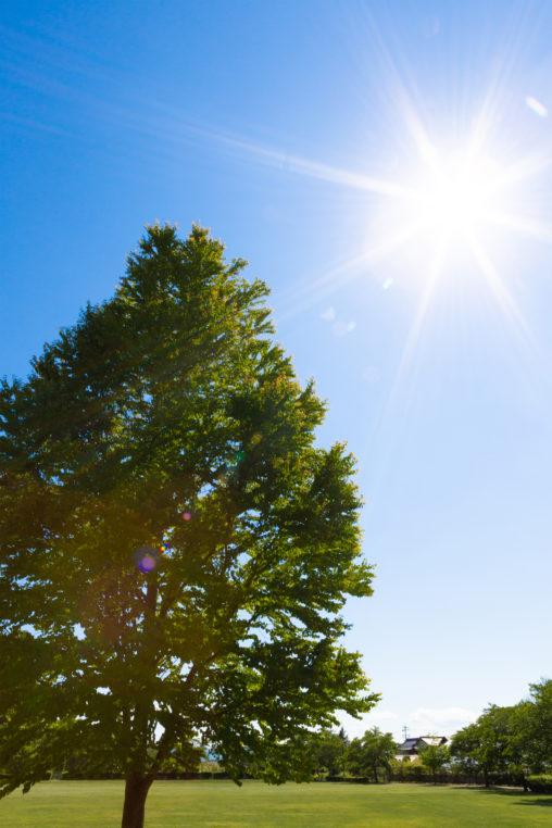 日差しと木の写真素材