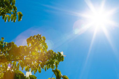 初夏の日差しの写真素材