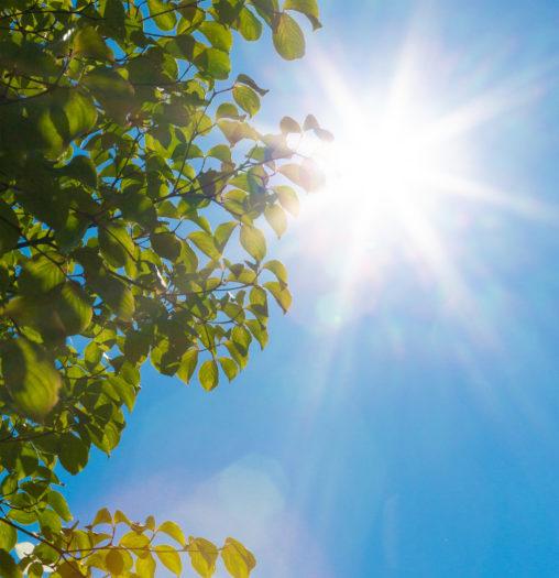 初夏の日差し02の写真素材