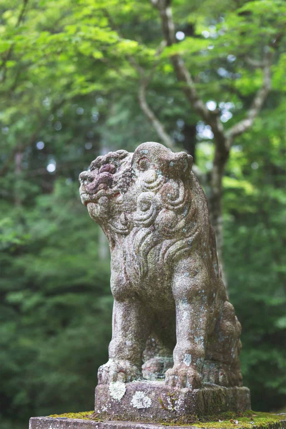 樹々と狛犬の写真素材