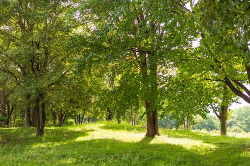 夏の日差しの木陰の写真素材