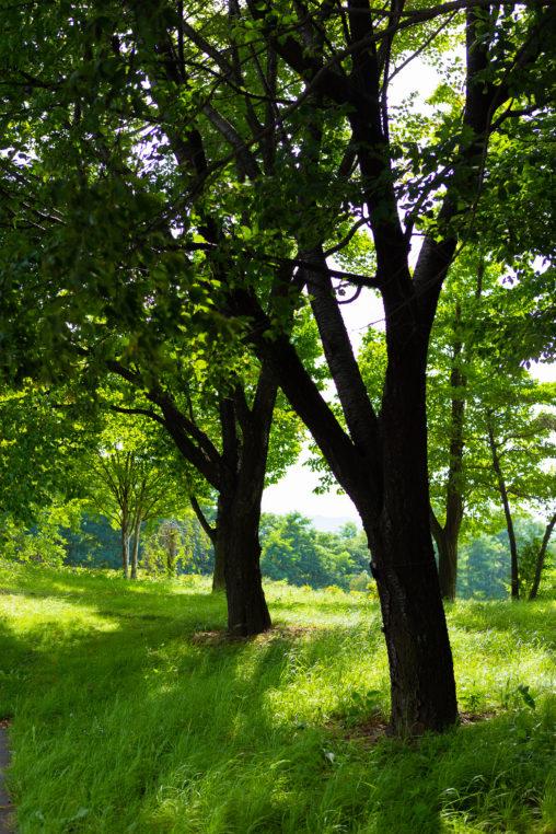 夏の日差しの木陰02の写真素材