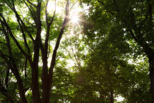 夏の日差しの木漏れ日の写真素材