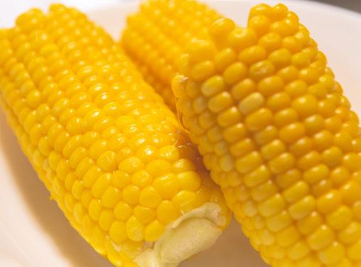 茹でたトウモロコシの写真素材