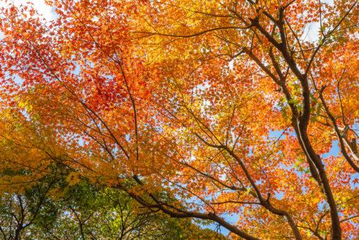 紅葉と青空の写真素材