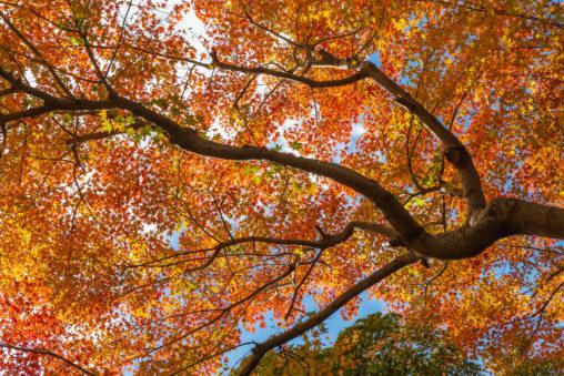 紅葉と青空02の写真素材