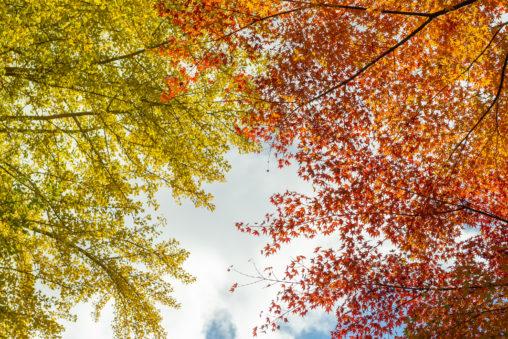 紅葉とイチョウの写真素材