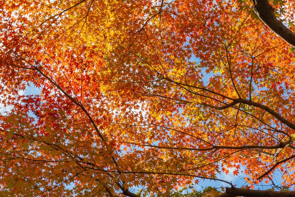 紅葉と青空04の写真素材