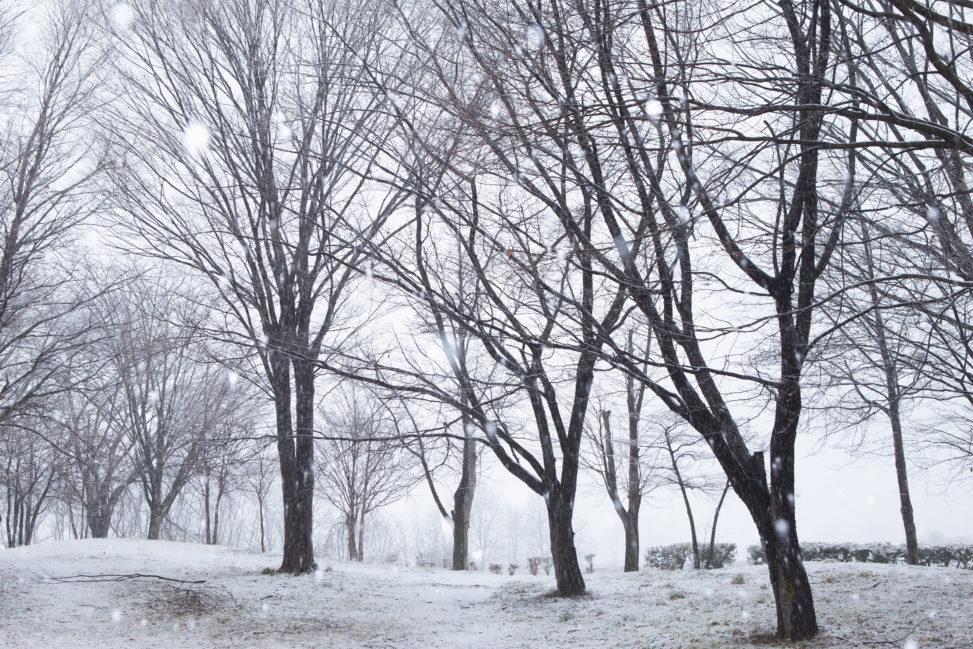雪が降っている冬の風景の写真素材