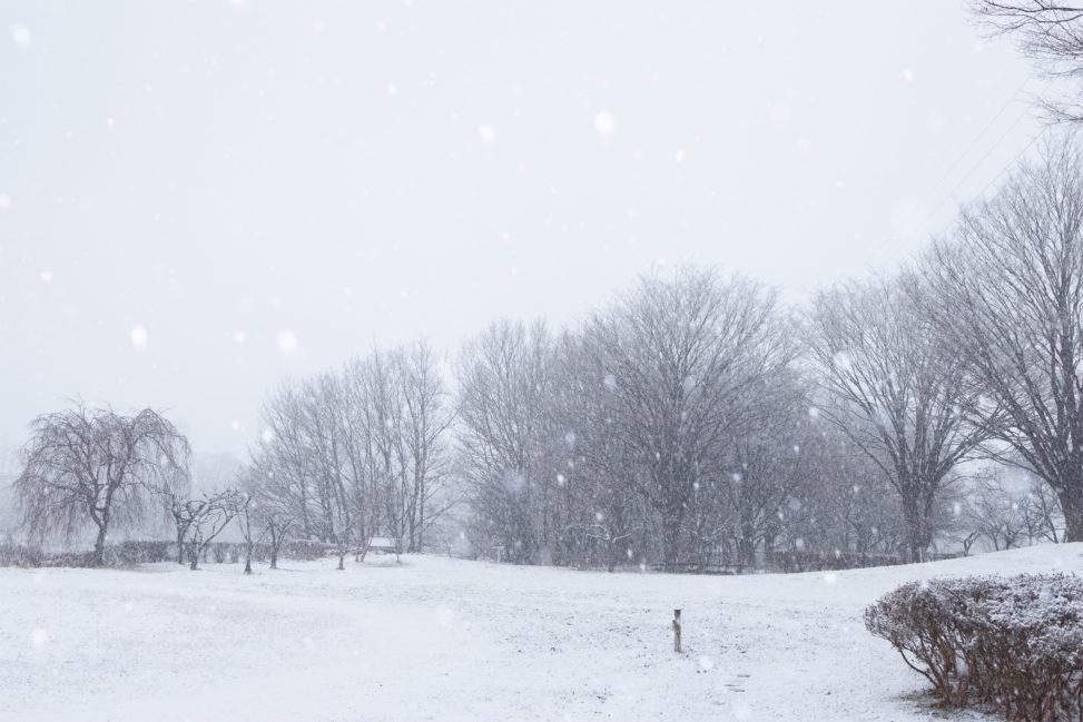 雪が降っている冬の風景02の写真素材