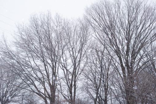 雪が降っている冬の風景03の写真素材