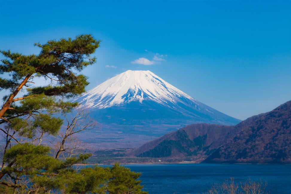 松と本栖湖と富士山のフリー写真素材