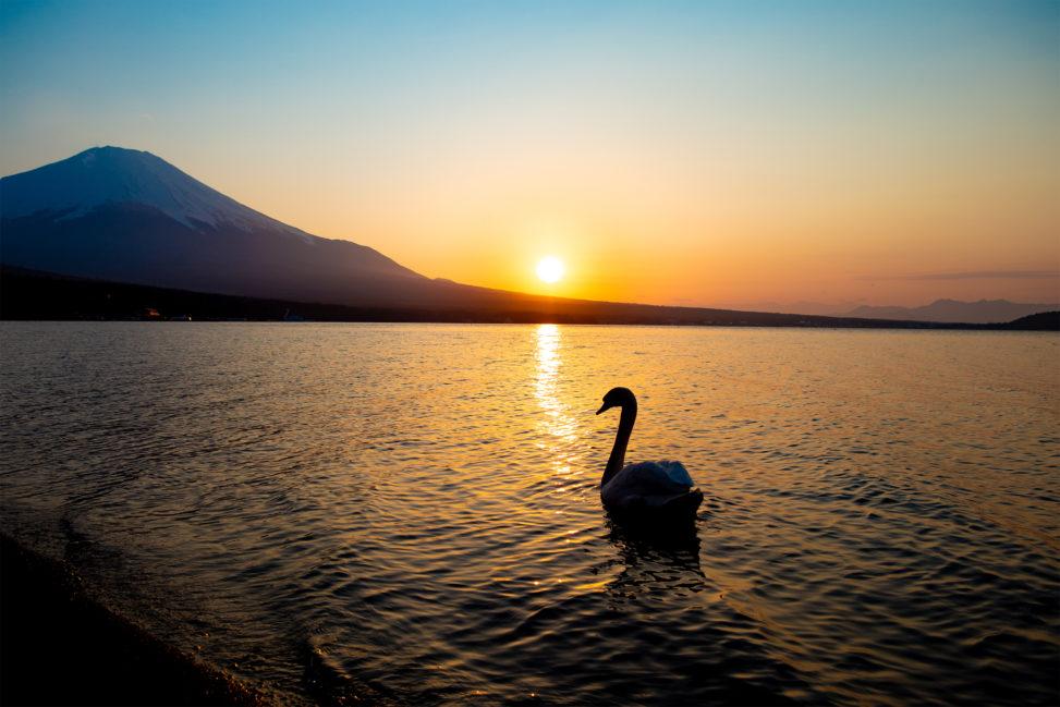 夕日と白鳥と富士山のフリー写真素材