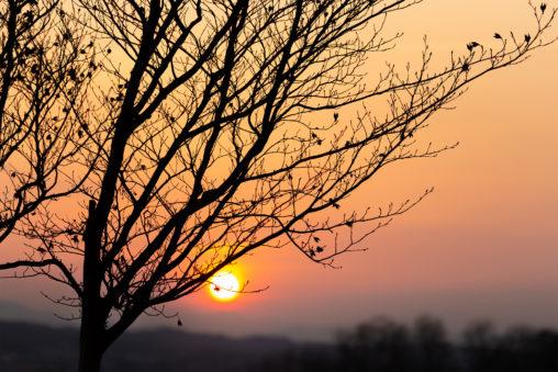 木の枝と夕日のフリー写真素材