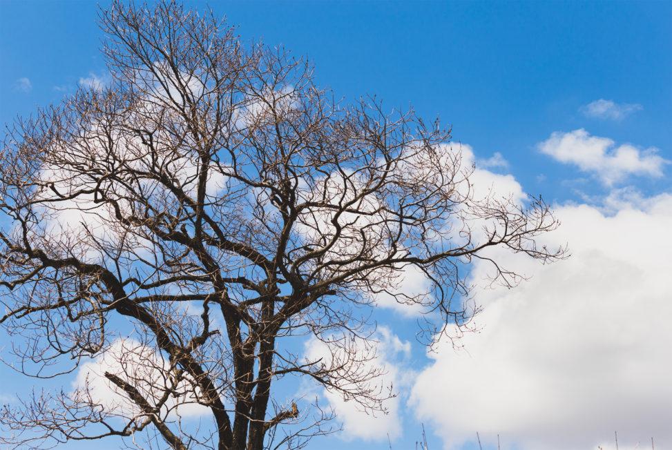 青空と雲と木のフリー写真素材