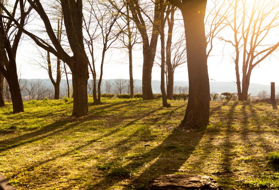 夕日と木立の陰のフリー写真素材