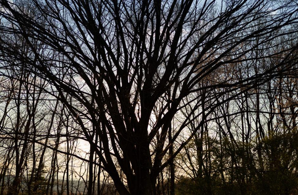 たくさんの木の枝のシルエットのフリー写真素材