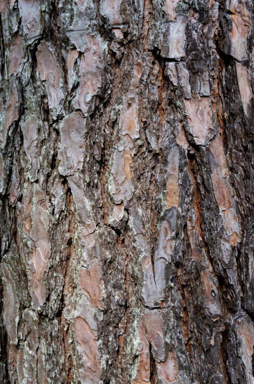 松の木肌のテクスチャー03のフリー写真素材