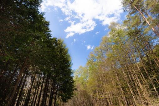 木立と青空のフリー写真素材