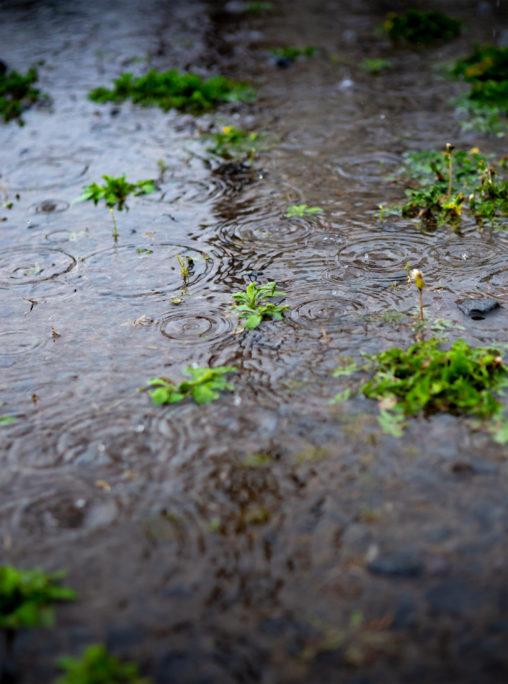 雨の日の水溜まりのフリー写真素材