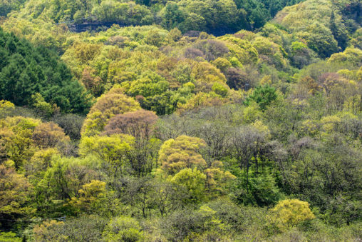 新緑の樹々のフリー写真素材