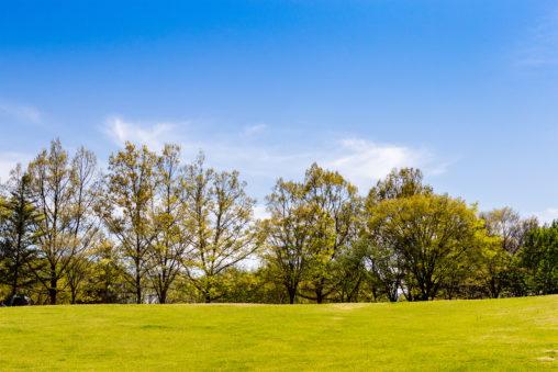 鮮やかな芝生と木立と青空のフリー写真素材