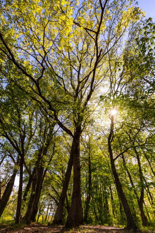 新緑の樹々と日差しのフリー写真素材