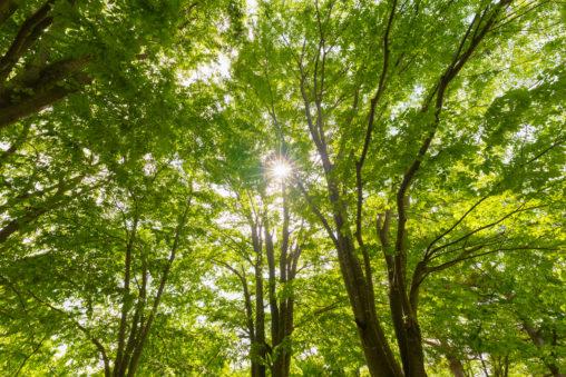 鮮やかな新緑と太陽の日差しのフリー写真素材