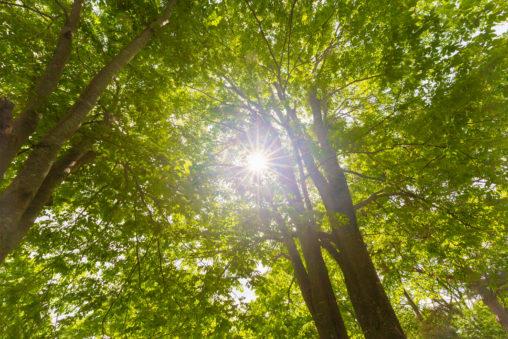 太陽光と鮮やかな新緑のフリー写真素材