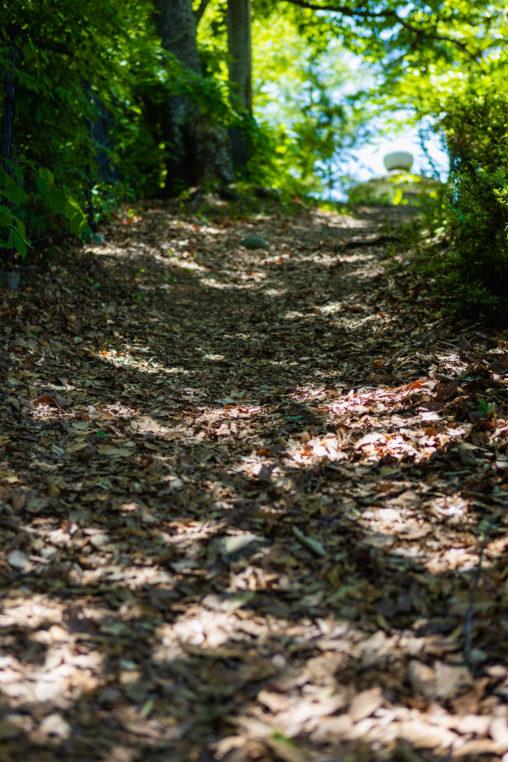 新緑と落ち葉の山道のフリー写真素材