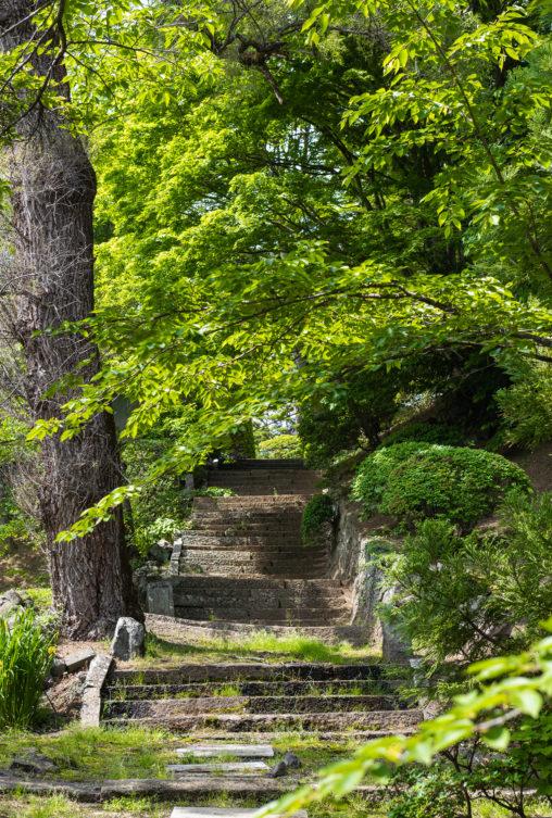新緑と石段のフリー写真素材