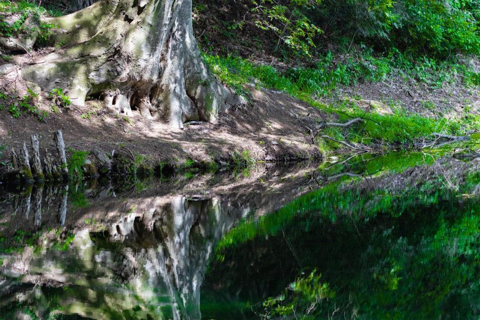 水面に反射する木の根元のフリー写真素材