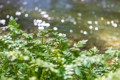 緑とキラキラした水面のフリー写真素材