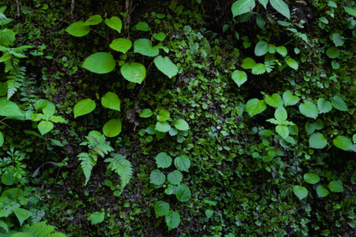 苔と葉のフリー写真素材