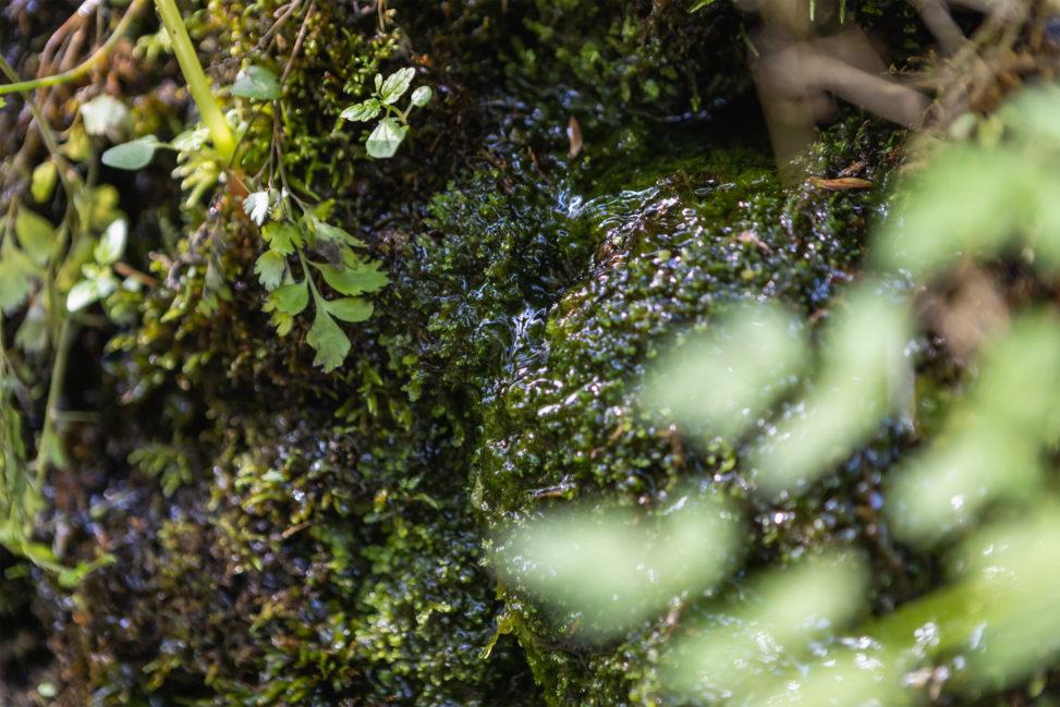 苔の石垣から出る湧き水のフリー写真素材