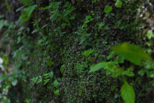 苔の石垣のフリー写真素材