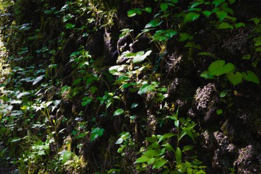 苔の石垣と日差しのフリー写真素材