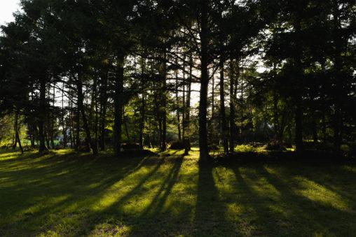 木立と日差しのフリー写真素材