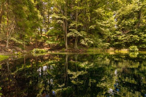 新緑が反射している大沼の池のフリー写真素材