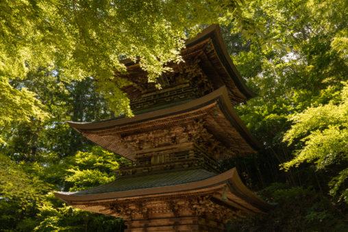 三重塔と新緑の樹々のフリー写真素材