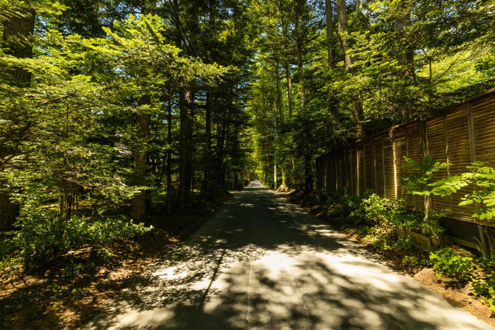 新緑の木漏れ日の道/軽井沢のフリー写真素材