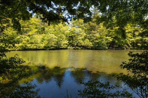 新緑の木立と雲場池(軽井沢)のフリー写真素材