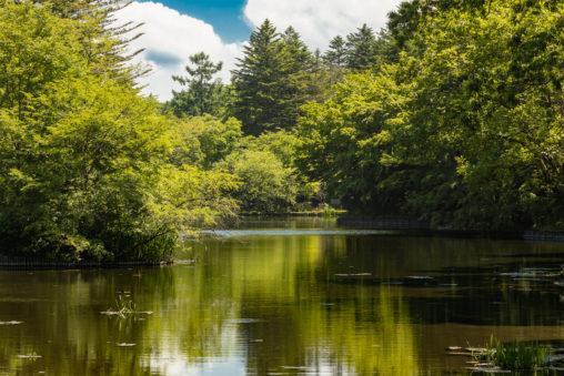 新緑と雲場池(軽井沢)のフリー写真素材