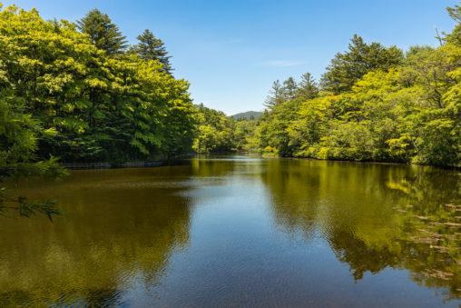 新緑と青空の雲場池(軽井沢)のフリー写真素材