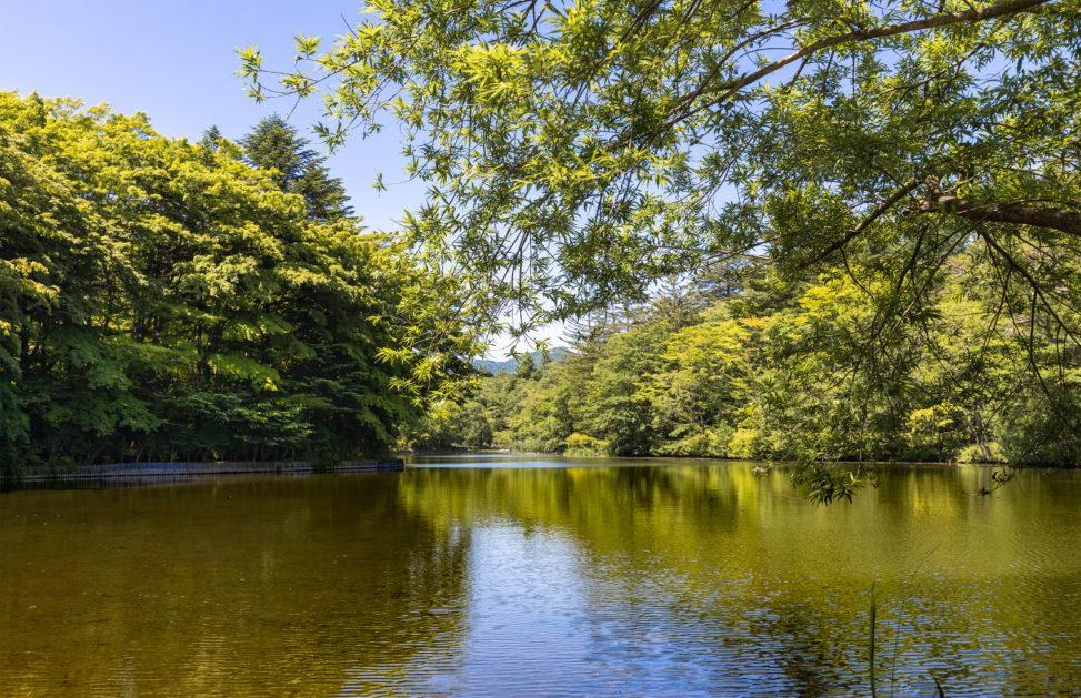 新緑と青空の雲場池(軽井沢)02のフリー写真素材
