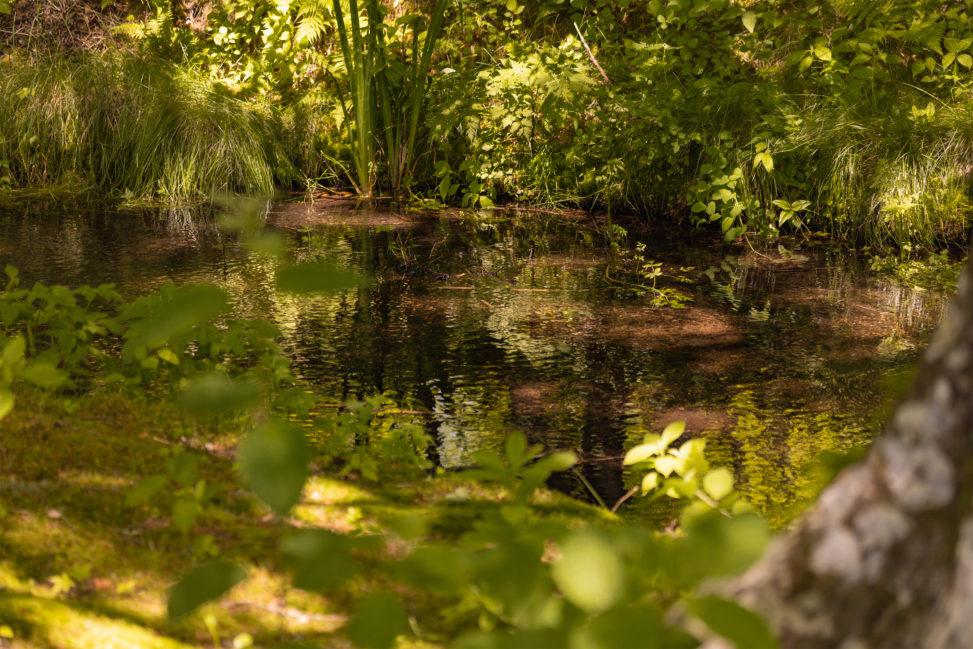 新緑の中の小川のフリー写真素材